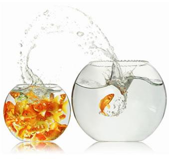 fishbowl.jpg